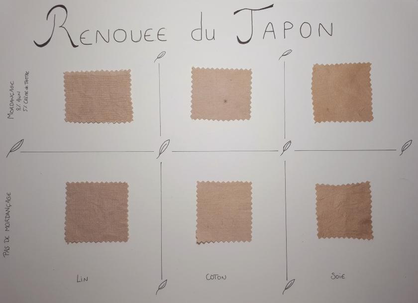 renouée du japon; fallopia japonica; teinture renouée; teinture fallopia; teinture végétale; teinture naturelle; teinture feuilles
